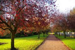 Keir Park
